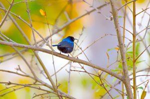 Forgiveness Bird on Branch